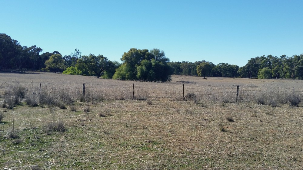 Real Estate in Gilgandra
