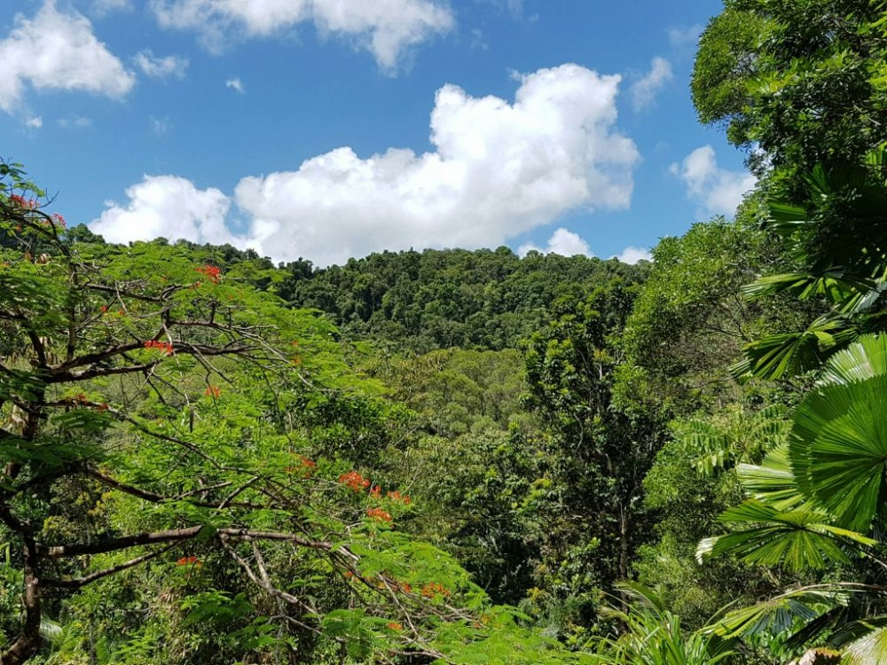 Glorious mountain and rainforest views