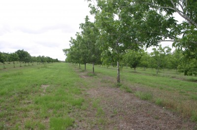 Property in Bora Ridge - $1,800,000.00