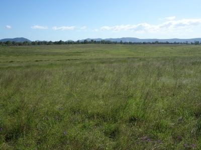 Property in Lower Wonga - $119,000