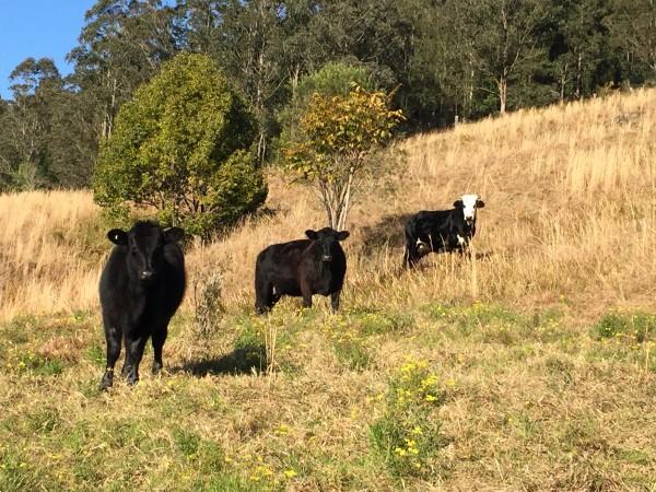 3 Rose Hill Lane, Yarramalong, NSW 2259