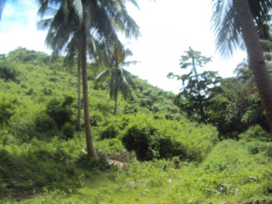 Palawan real estate For Sale